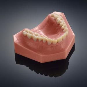 Dental_Model_1
